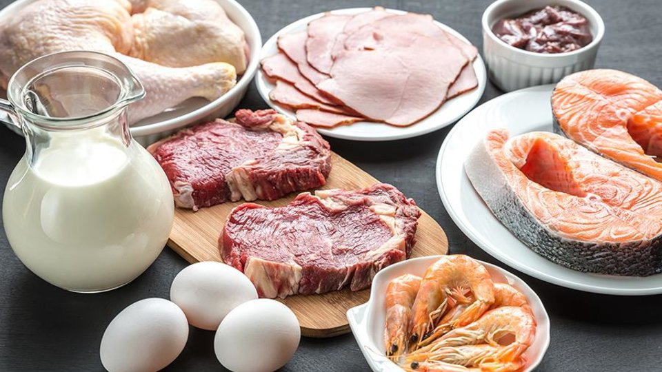 Protein's Critical Role in Body Composition